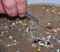 Photo showing hand-picking of plastic pieces millimeters in size.