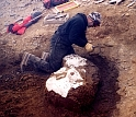 A researcher carefully excavates a fossilized juvenile plesiosaur on Vega Island, Antarctica.