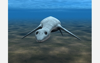 This animation shows how the juvenile plesiosaur might have appeared.