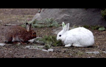 two hares on a forest floor