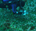 Image of a diver taking notes while examining a study area on the ocean floor.