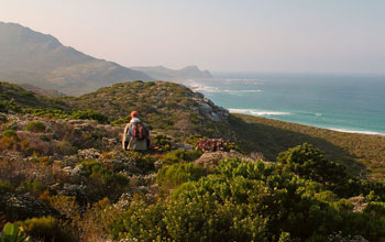 Photo of biologist Ross Turner on a protea-laden ridge on the Cape of good Hope, South Africa.