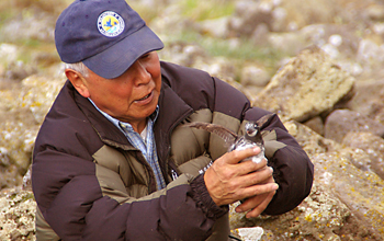 Photo of Caleb Pungowiyi holding a bird on St. Lawrence Island.