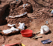 Fossils are carefully excavated and covered before encasement in protective plaster jackets.