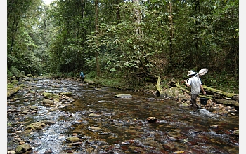 FIBR scientists will study ecology and evolution in Trinidad streams.