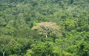 Picture of rainforest on the lower Cristalino River in the southern Amazon of Brazil.