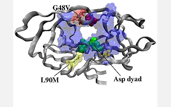Computational simulation of the HIV-1 protease