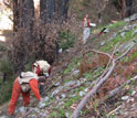Three ecologists in the forest surveying the burned redwood