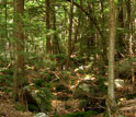 Photo of one of the NSF Harvard Forest LTER sites.