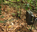 Photo of a camera-trap placed at a seed cache.