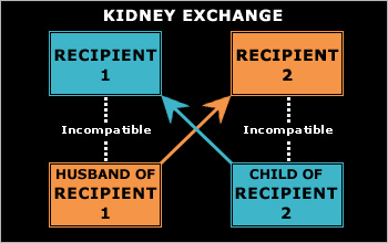 Diagram of an exchange performed because of blood type incompatibility.
