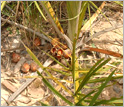 Palm nuts at ground level