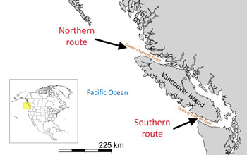 Map showing Vancouver and Pacific ocean and arrows indicating southern and northern route of salmon