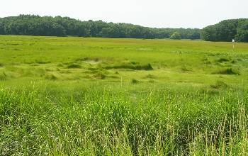 Photo of a green salt marsh.