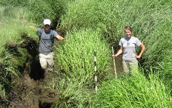 Photo of Scientists Erik Yando and Clara Chaisson measuring marsh that has slumped into a creek.