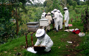 team of scientists collecting hives
