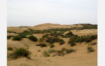 Photo of sand dunes and vegetation in China.