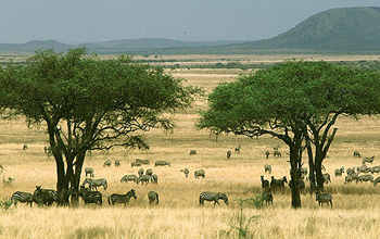 Savanna grasslands punctuated with scattered trees.