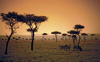 Savanna with trees and animals in Kenya.