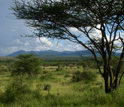 An alternate view of the extensive savanna in Kenya's Samburu National Reserve.