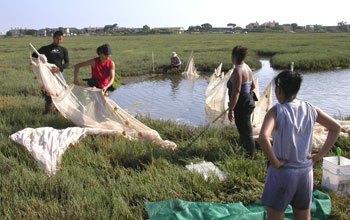 Photo of scientists quantifying the abundance and diversity of fishes at Carpinteria Salt Marsh.