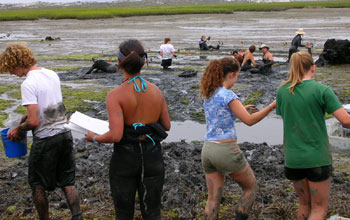 Photo of a field research team sampling animals at a mudflat study site.