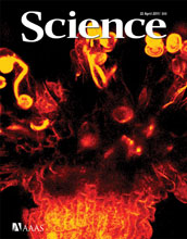 Cover of the April 22, 2011 issue of the journal Science.