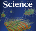 Cover of the July 30, 2010, issue of the journal Science.