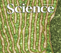 Cover of the November 25, 2011 issue of the journal Science