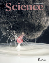Cover of the Nov. 26, 2010 issue of Science.