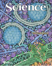Image of the Dec. 3, 2010 Science cover.