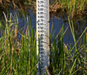 Photo of a gauge in a wetland that measures the rise of sea level.
