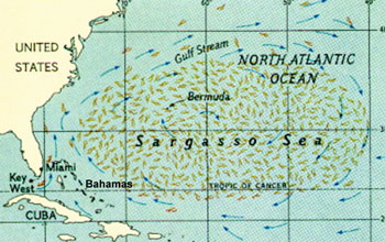 Map of the Caribbean Sea and North Atlantic Ocean showing the location of the Sargasso Sea.