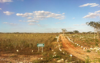 Image of dirt road lined with stones through Kuoso's plantation of jatropha in Yucatan, Mexico.