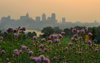 Photo with the skyline of St. Paul, Minn. in the background, wildflowers in the foreground.