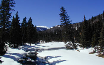Image of melting snow and conifers in the headwaters of the Rio Grande River in Colorado.