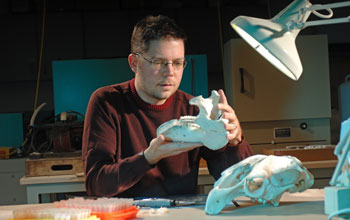 Photo of geologist Mark Clementz sampling tooth enamel from molars in a Florida manatee.