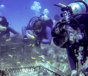 Scientists Rebecca Vega-Thurber, Ryan McMinds and Jerome Payet check on experimental coral plots.