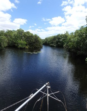 Common snook habitat in the upper Shark River in Everglades National Park.