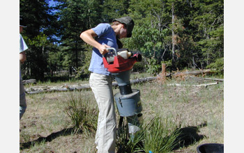 Photo of Andrea Jani collecting arthropods from sleepy grass in Lincoln National Forest, N.M.