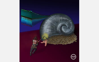 Illustration showing the coat that protects a deep-sea gastropod from a knight's lance.
