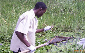 Photo of a man examining water for infectious snails in coastal Kenya.