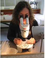 Photo of Indiana University student Kayla King dissecting snails under the microscope.