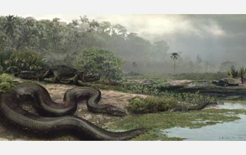 This artist's rendering of the largest snake on record shows its size; it lived in or near water.