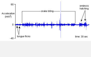 Graph of vibrations caused by a snake attack on a clutch of frog eggs