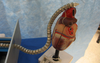 Image of a snake robot that seeks out and removes damaged tissue in a heart.