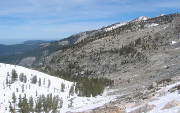 Photo of a Sierra Nevada forest in Sequoia National Park.