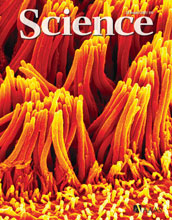 Cover of the August 28, 2009, issue of Science magazine.