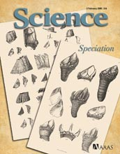 Image of the Feb. 6, 2009 cover of the journal Science.