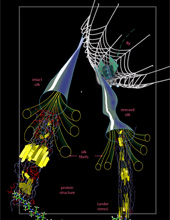 This image shows how a spider web responds to stress, from web scale to the scale of proteins.